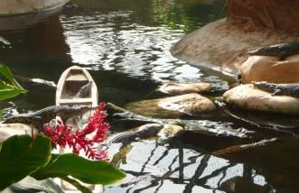crocodiles-civaux